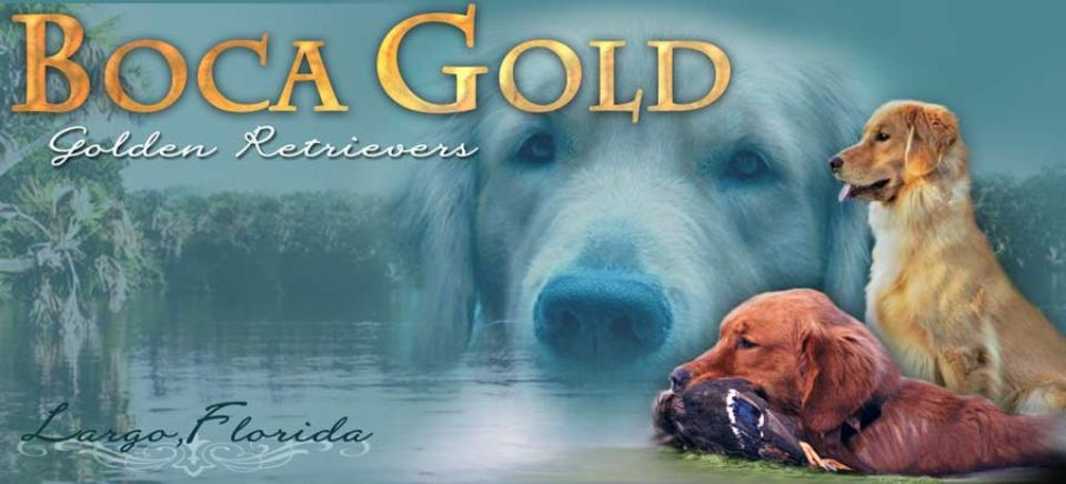 Boca Gold